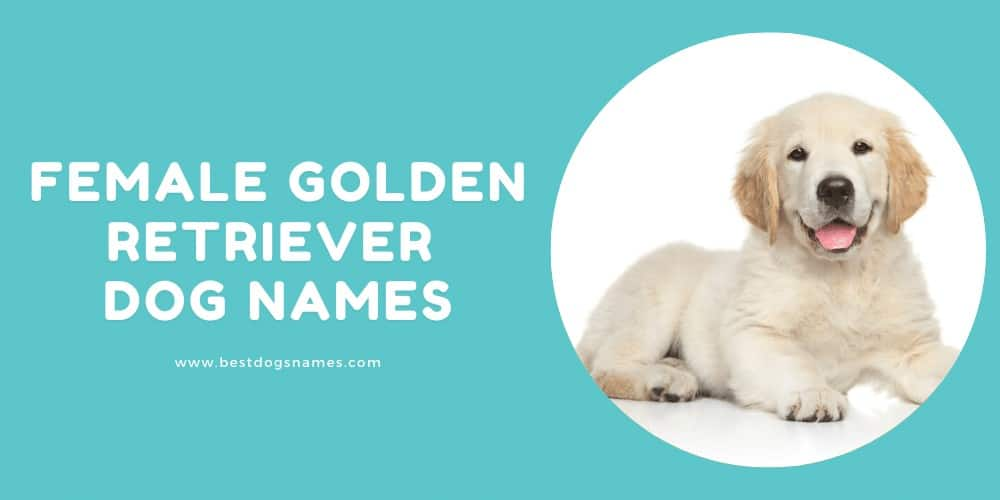 Female Golden Retriever Dog Names