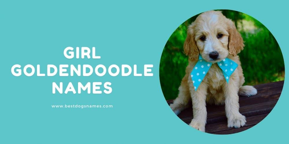 Girl Goldendoodle Names