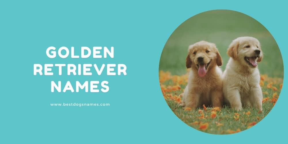 Golden Retriever Names