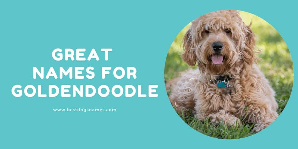 Great Names for Goldendoodle