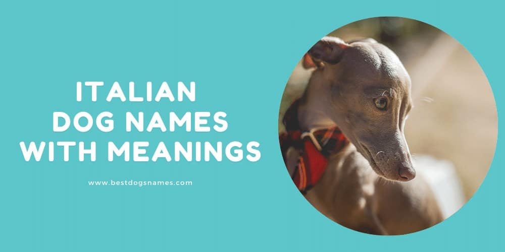 Italian Dog Names With Meanings