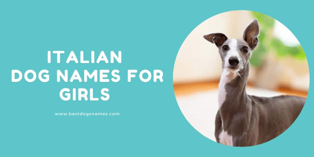 Italian Dog Names for Girls With Meanings