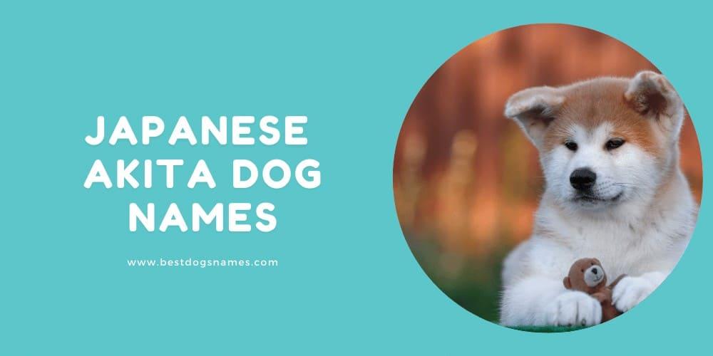 Japanese Akita Dog Names