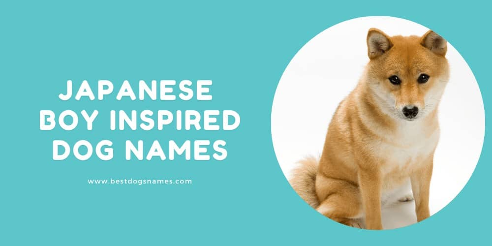 Japanese Boy inspired Dog Names