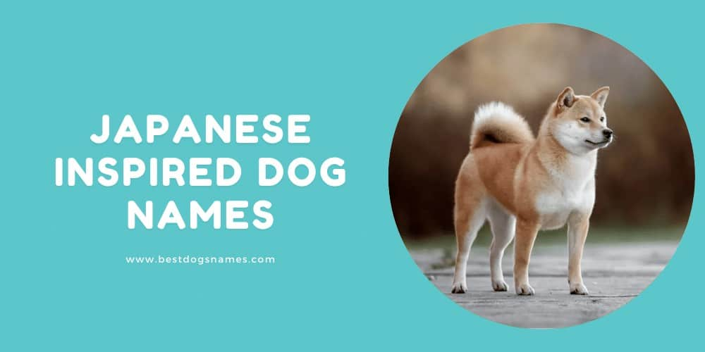 Japanese inspired Dog Names