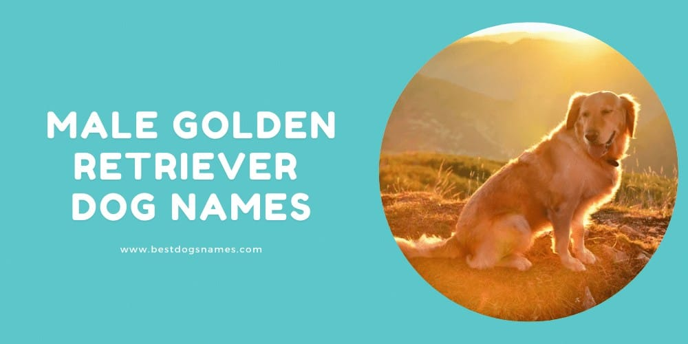Male Golden Retriever Dog Names