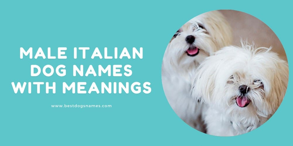 Male Italian Dog Names With Meanings