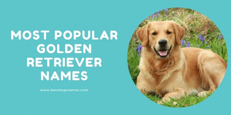 Most Popular Golden Retriever Names