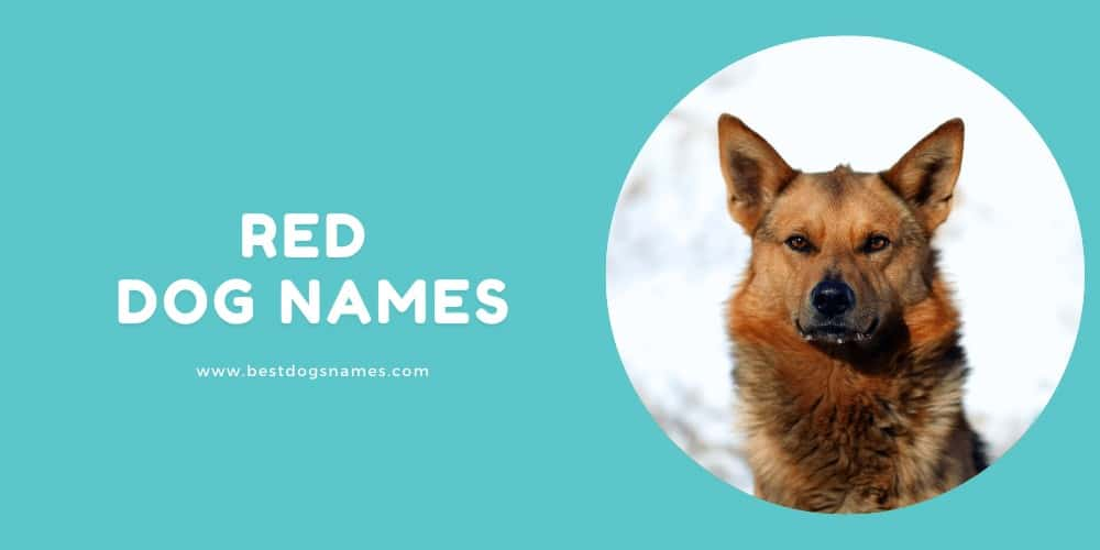 Red Dog Names