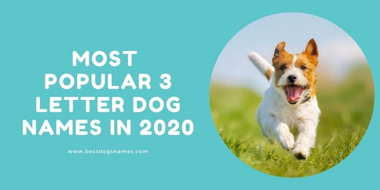 The Most Popular 3 Letter Dog Names in 2020