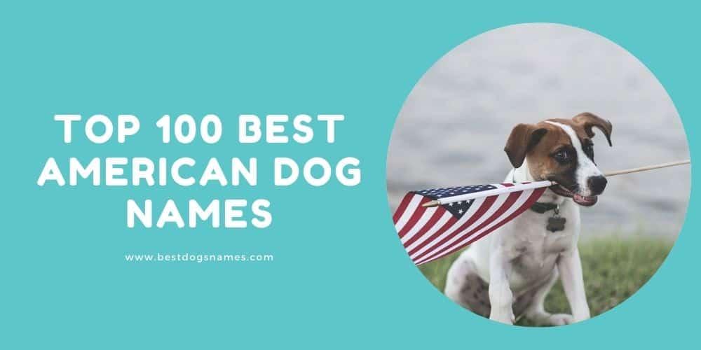 American dog Names