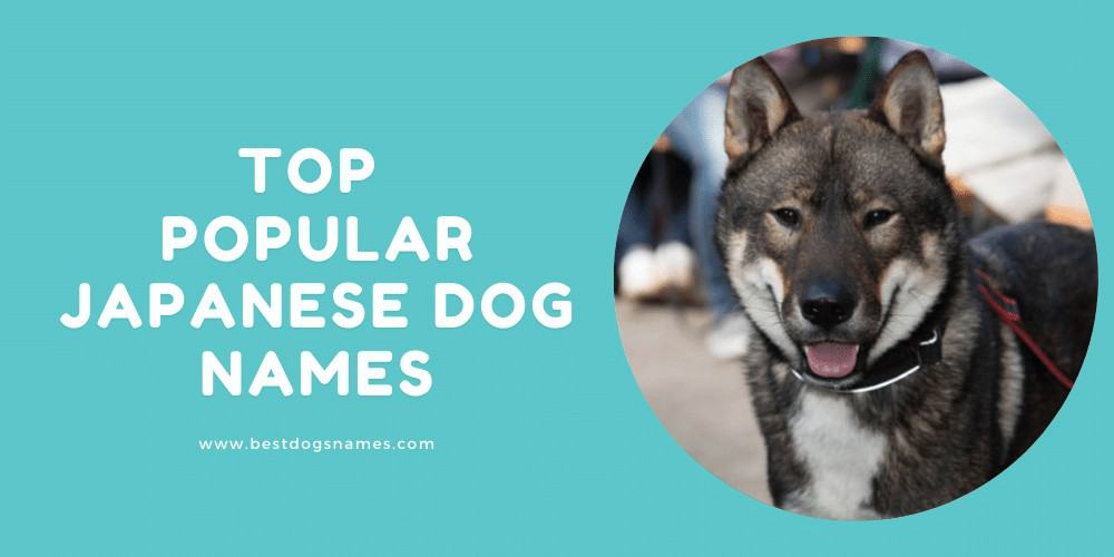 Top popular Japanese Dog names