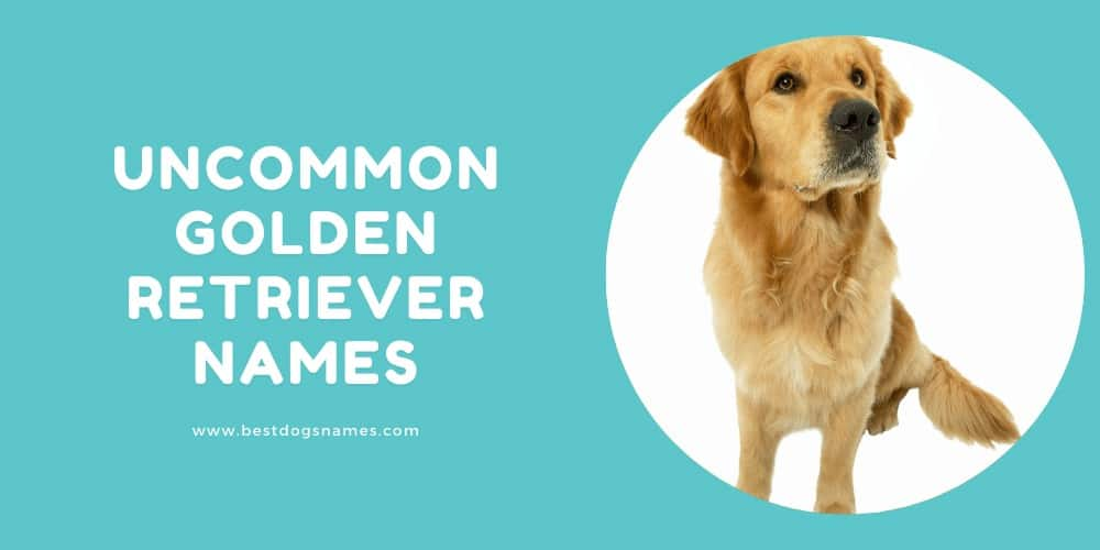 Uncommon Golden Retriever Names