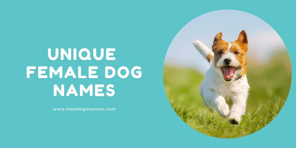 Unique Female Dog Names