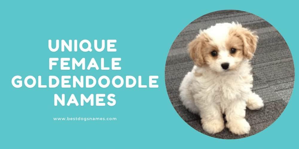 Unique Female Goldendoodle Names