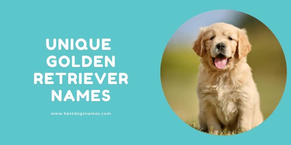 Unique Golden Retriever Names
