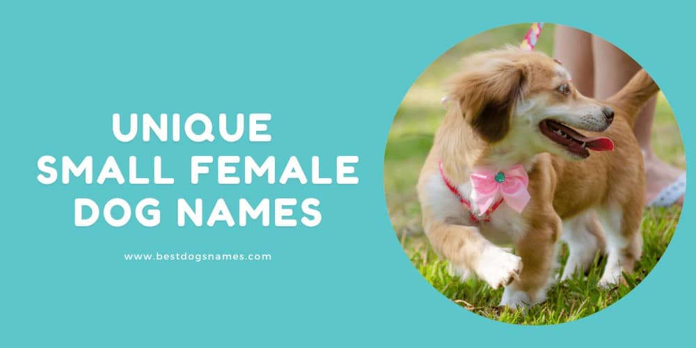 Unique Small Female Dog Names