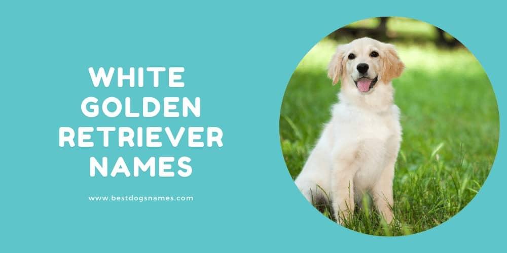 White Golden Retriever Names