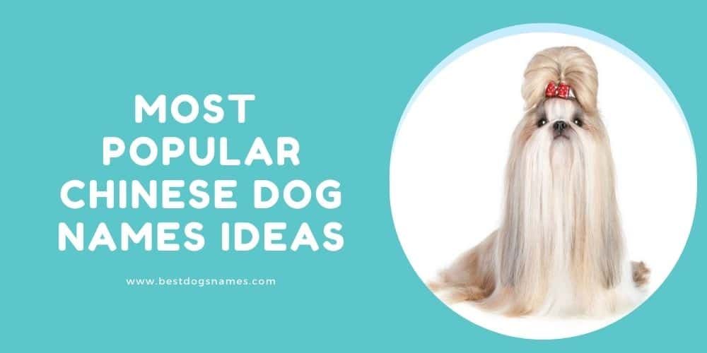 100 Most Popular Chinese Dog Names Ideas